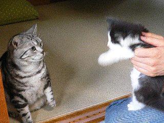 見つめあう二猫